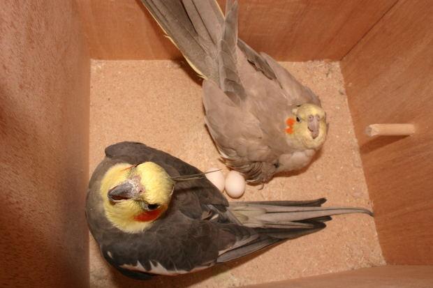 Lo que debe saber sobre los pájaros que anidan en su patio