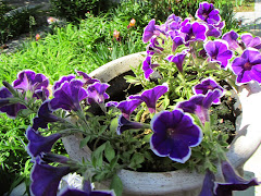 Purple petunias seem to have