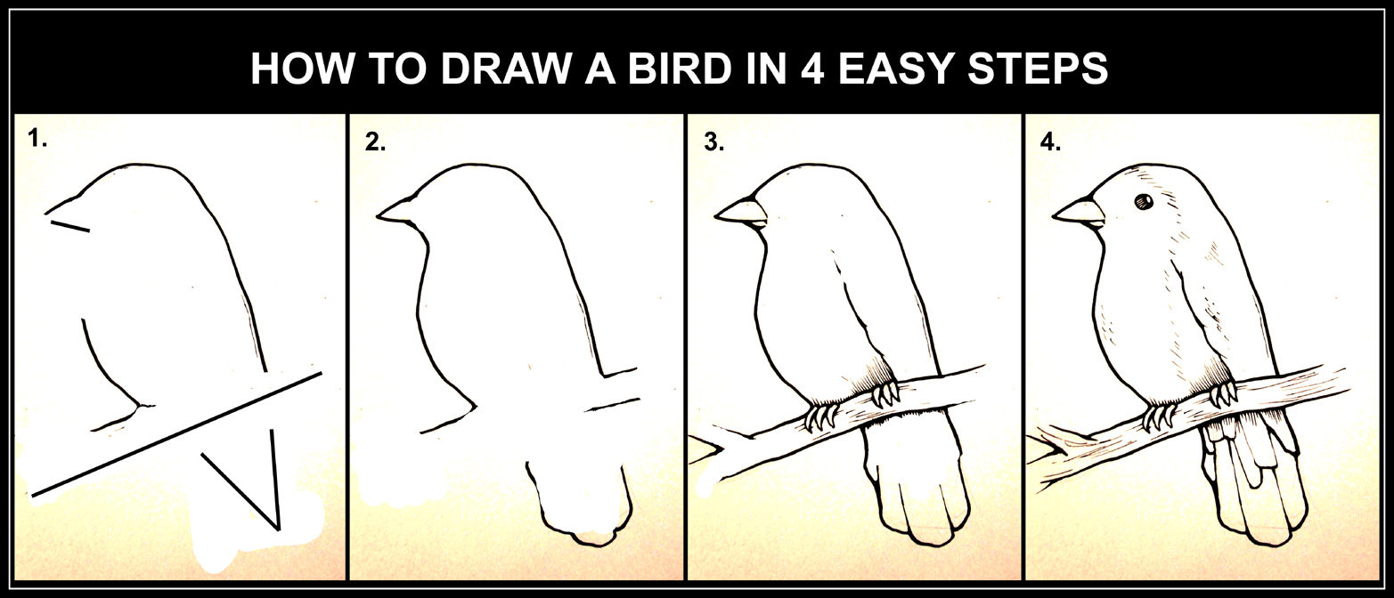 how to draw a bird step by step art guide daryl hobson artwork