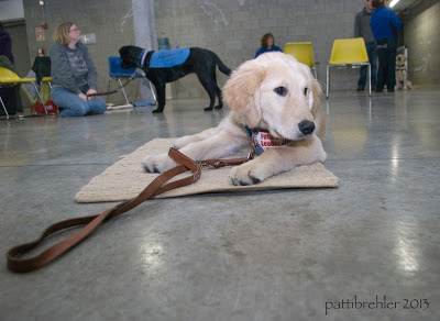 A golden retriever puppy is lying with his head up on a light brown mat on a shiny cement floor. His leash is resting on the floor to the left. In the background is a lady kneeling down holding the leash to a black lab wearing a blue training jacket. A few yellow chairs are in the background and a few other people.