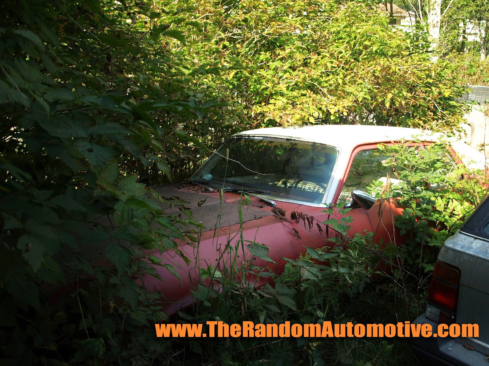 Rotting In Style 1974 Pontiac Ventura The Random Automotive