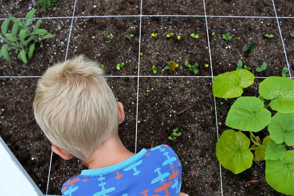 Когда сажают тыкву в открытый грунт семенами 36