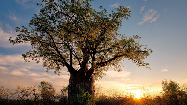 Zimbabwe Africa Landscape