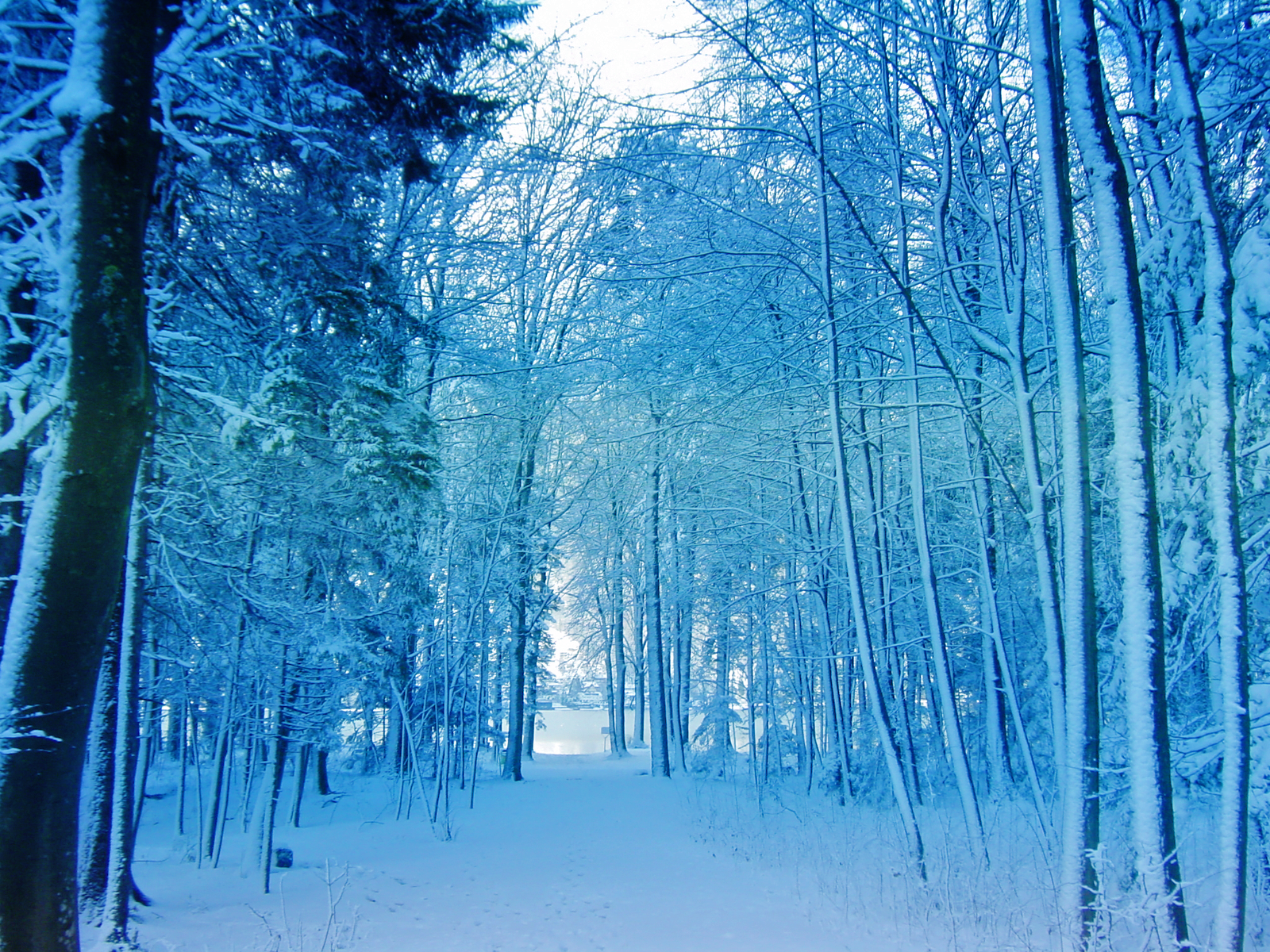 Democratic Forest Snow Wallpaper Conservatives Still Did Not Build It Or Invent It On Their