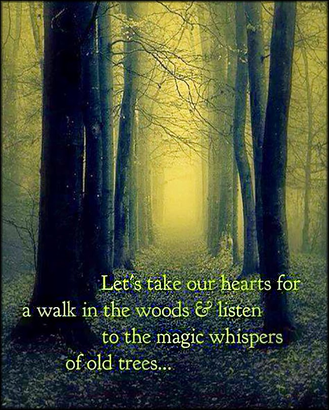 Fav Quote Friday Mindful Living The Beauty Magic And Miracles Of