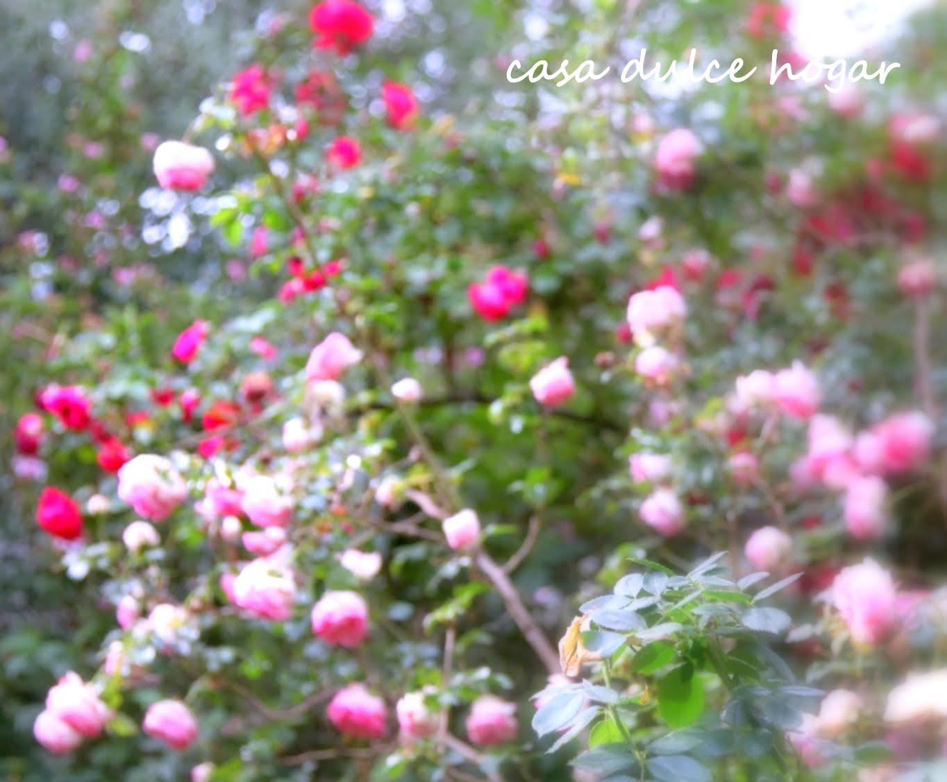 Jardín De Rosas Imágenes gratis en Pixabay