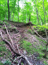 Waterthrush nest habitat