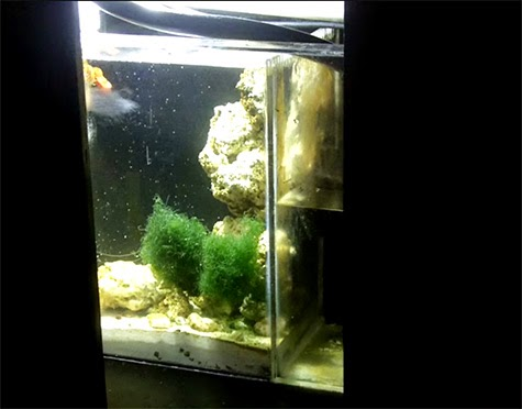 how to control phosphate in a reef tank marine depot blog