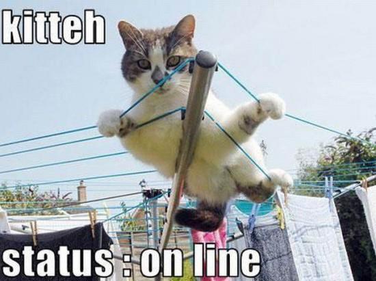 Kitteh - Status On line