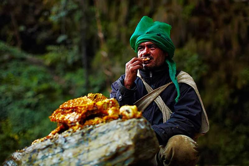 Honey Hunters | Gurung Tribes Nepal