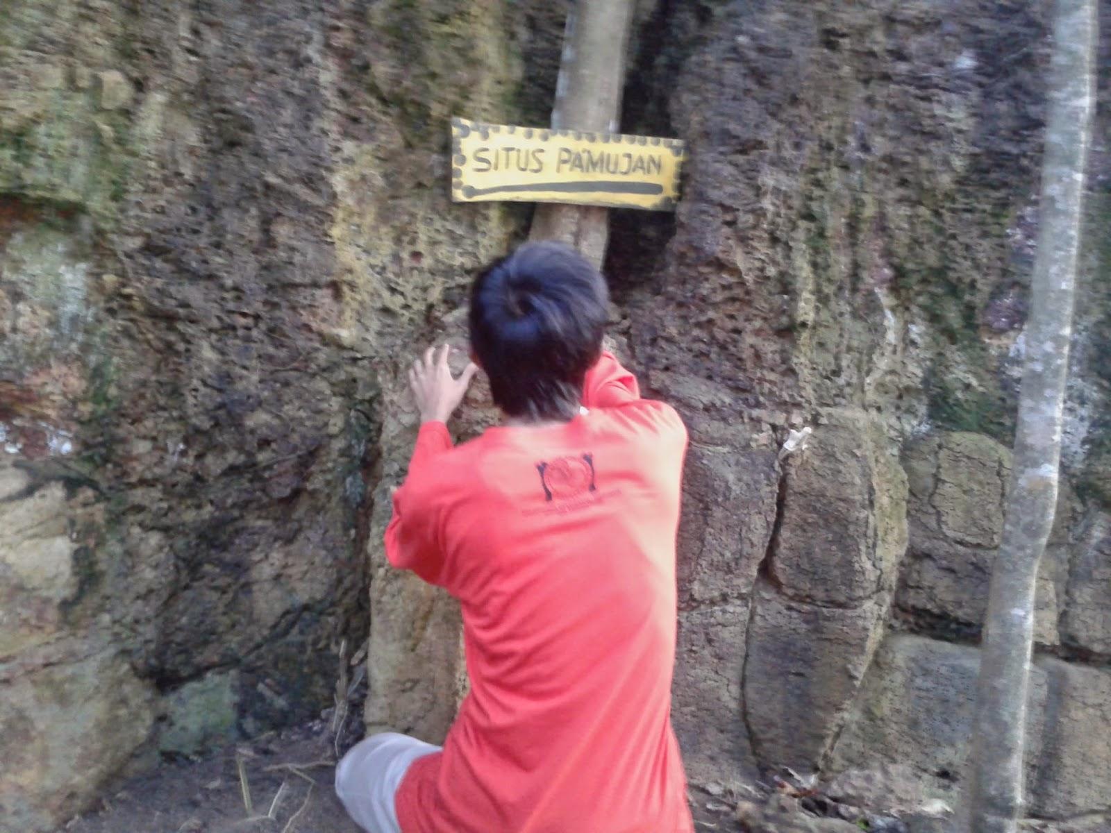 Pohon dan batu di situs Pamujan