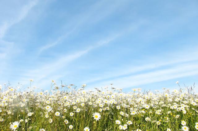 Hình ảnh hoa đẹp 21
