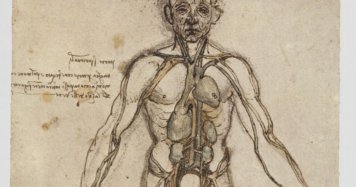 Fein Da Vinci Anatomie Skizzen Ideen - Anatomie Ideen - finotti.info