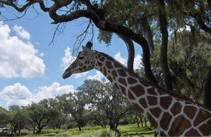 Crystal Hunter: Safari