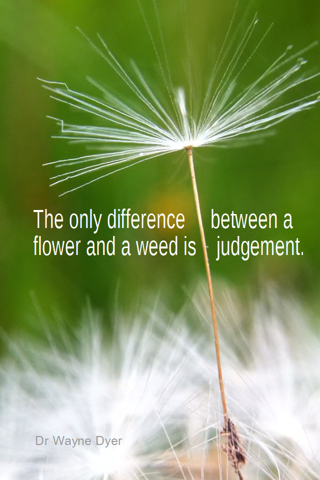 visual quote - image quotation for PERSPECTIVE - The only difference between a flower and a weed is a judgment. - Dr Wayne Dyer