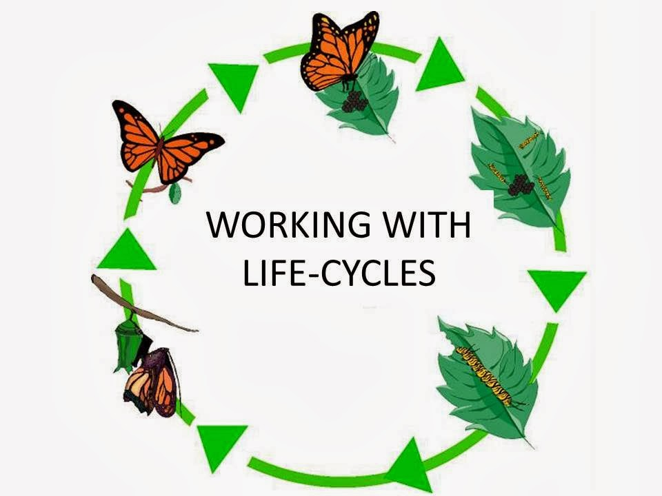 LIFE CYCLE PRESENTATIONS