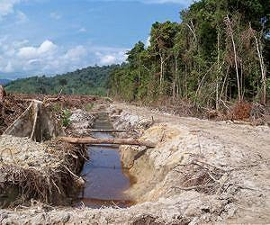 Water world | Perkebunan kelapa sawit mengancam kualitas air
