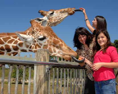 Zoo Miami Zoologico - Girafas