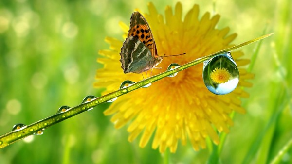 Crystal Rain Drop Butterfly Images HD