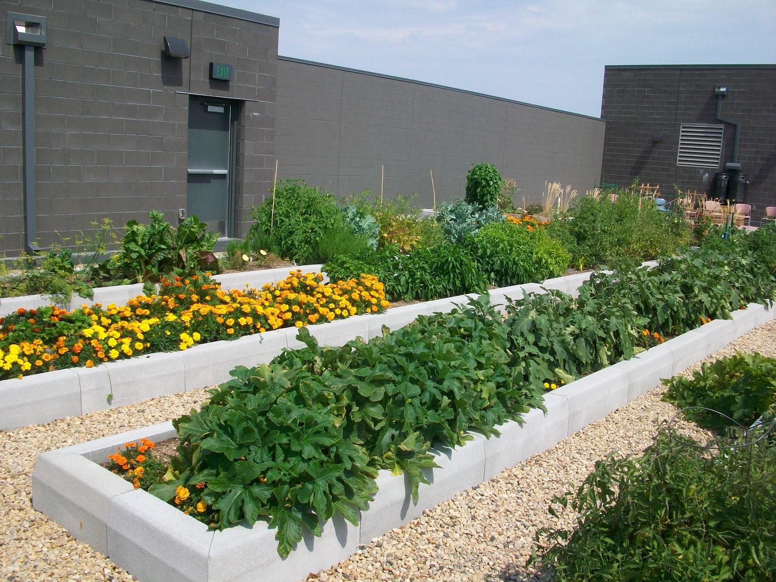 Edible Skyline A Rooftop Revolution in Milwaukee Flourishing