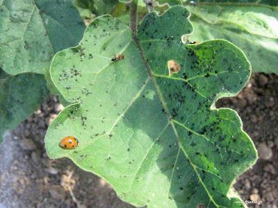 Φυσική προστασία από έντομα