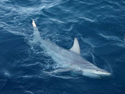 全球暖化 混種鯊魚