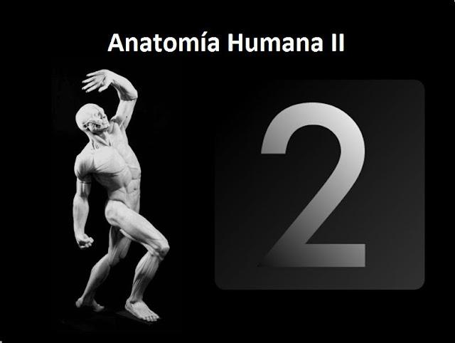 Clases de Anatomía Humana II del Dr. Franz Farfán