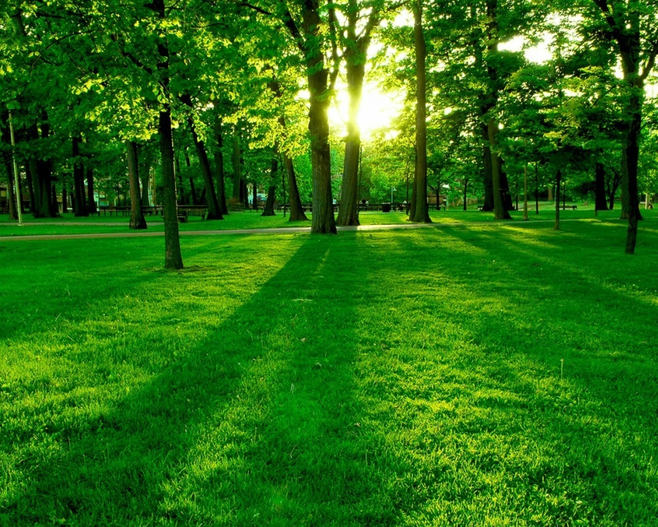 Beautiful forest wallpapers 521 entertainment world for Forest wallpaper