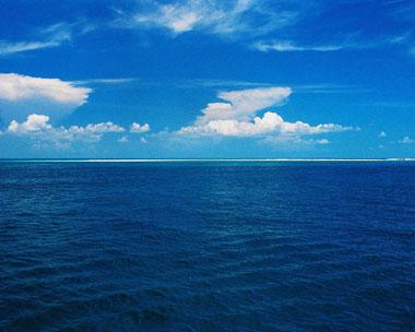 Fotosymasfotos im 193 genes del mar