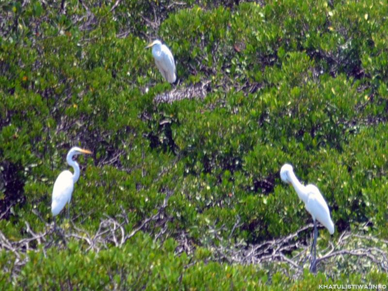 Pulau Rambut, Pulau Kerajaan Burung