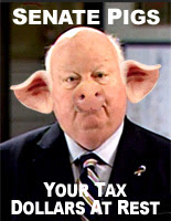 Senate Pigs