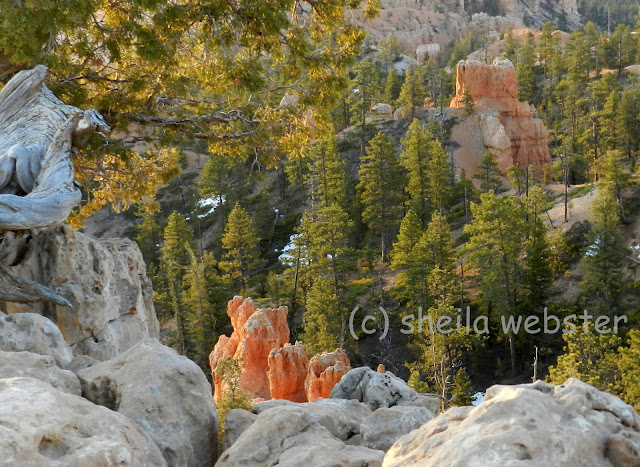The sun adds brightness to the orange hoodoos