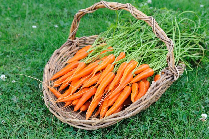 Hanielas Carrots from the Garden