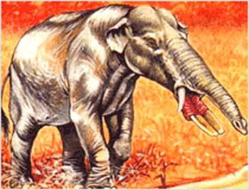 Paleomastodon Proboscidea extinct
