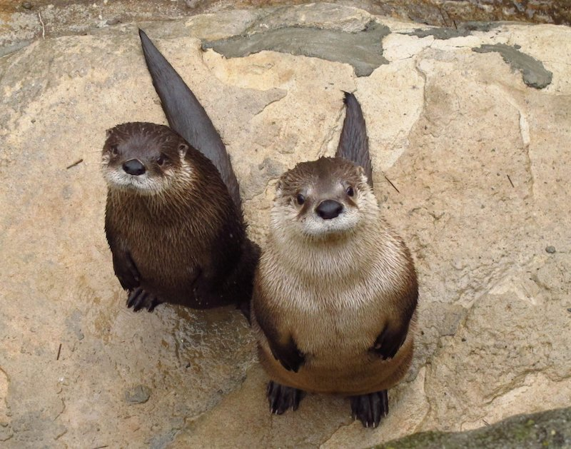 Western North Carolina Nature Center Animals