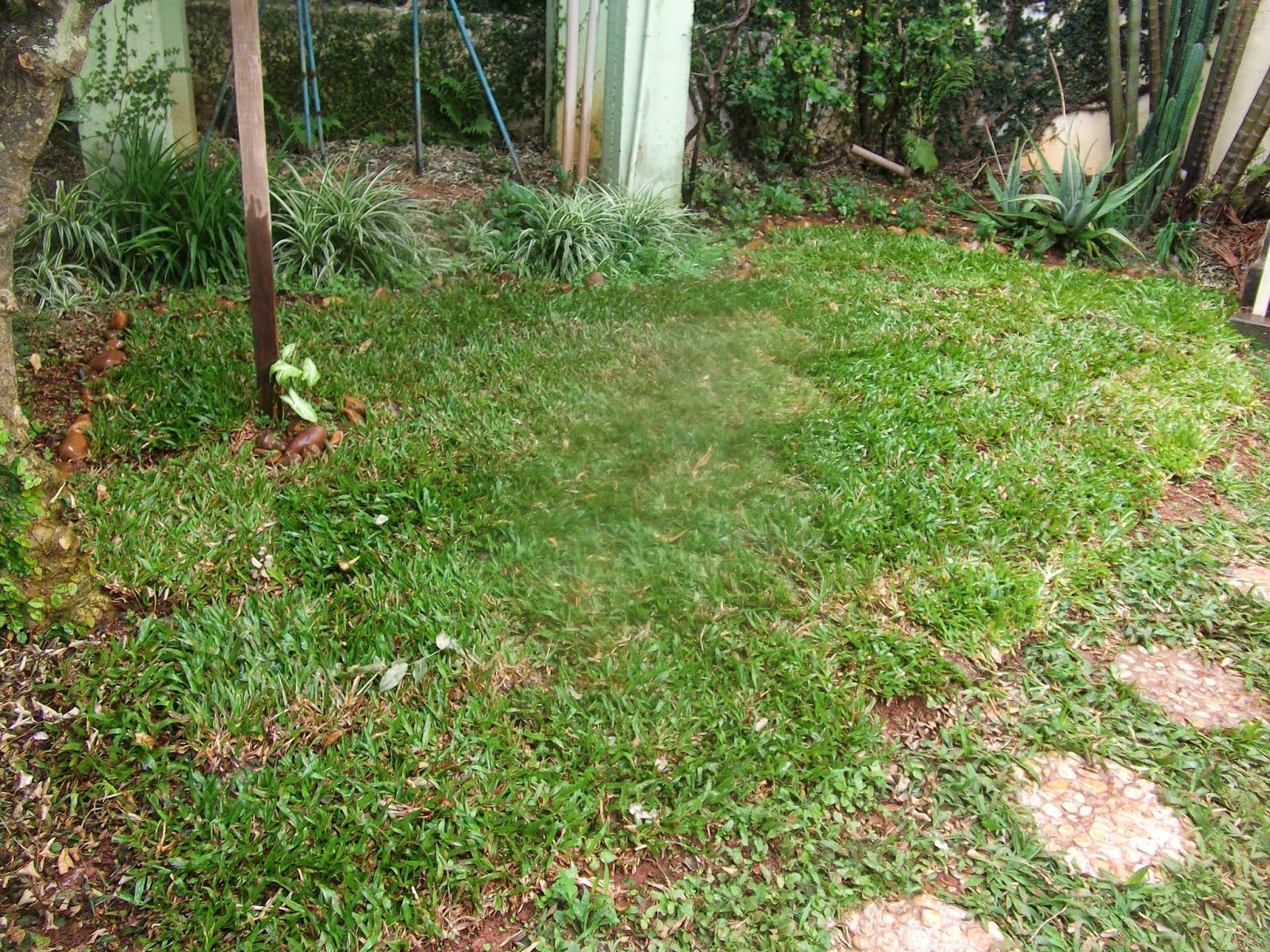 aplicacao deck jardim: Carlos em jardim, outubro 2013 ~ Seu Jardim Paisagismo e Jardinagem