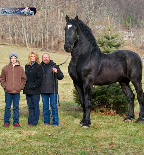 funny big horse picture