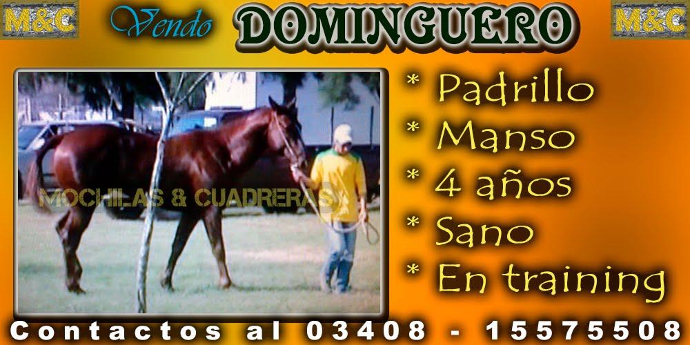 DMG - 11/04