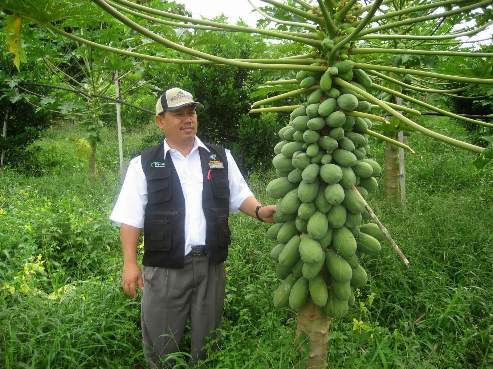 Kejayaan Malaysia Dalam Bidang Pertanian Mempromosikan Malaysia Sebagai Pusat Kecemerlangan Pelbagai Bidang