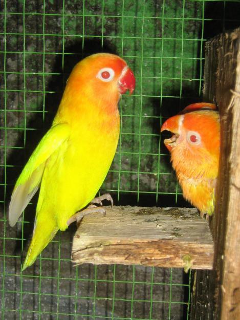 kicau alam daftar harga burung terbaru 2015