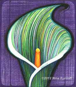 nina kuriloff fine art drawing of green calla lily in
