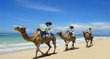 Bali Camel Safari Tour