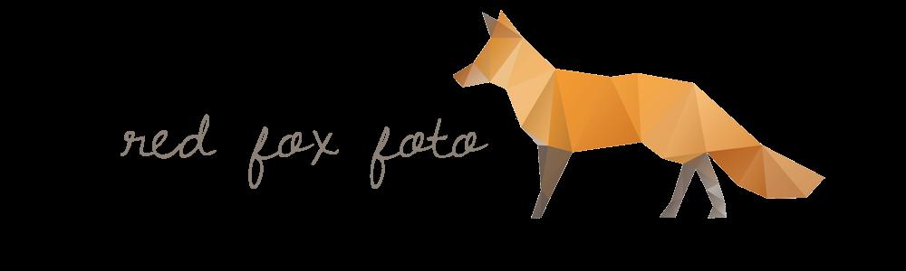 red fox foto