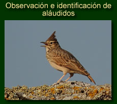 http://iberian-nature.blogspot.com.es/p/ruta-tematica-observacion-e_5046.html