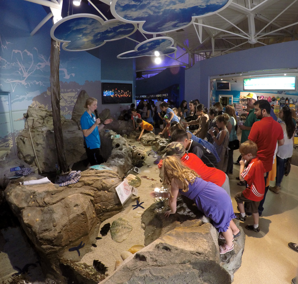 Tesyasblog Sea Life Sydney Aquarium Tiket Wild Anak Having Fun At The Discovery Rock Pool