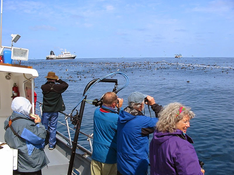 Pelagic bird watching off Oregon