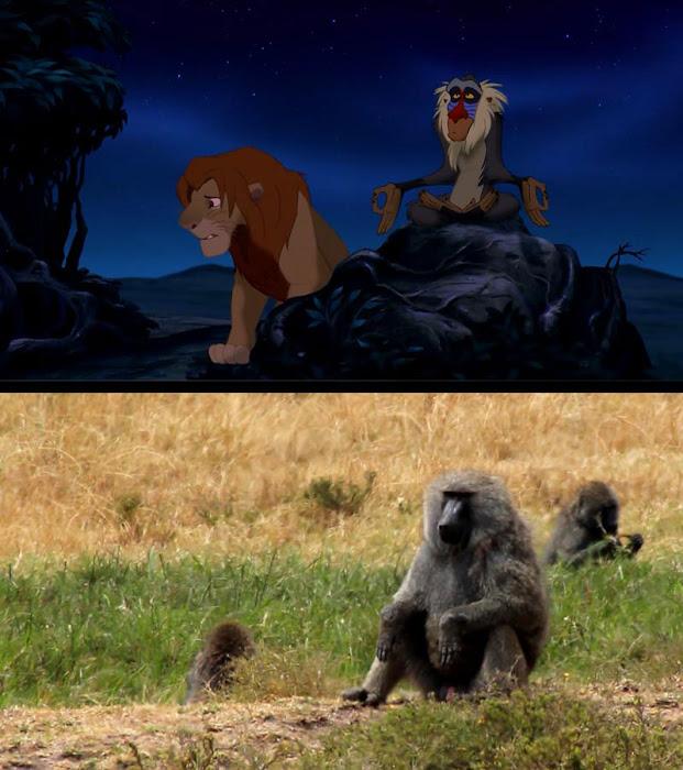 Escenas del Rey León vs un Safari de la vida real
