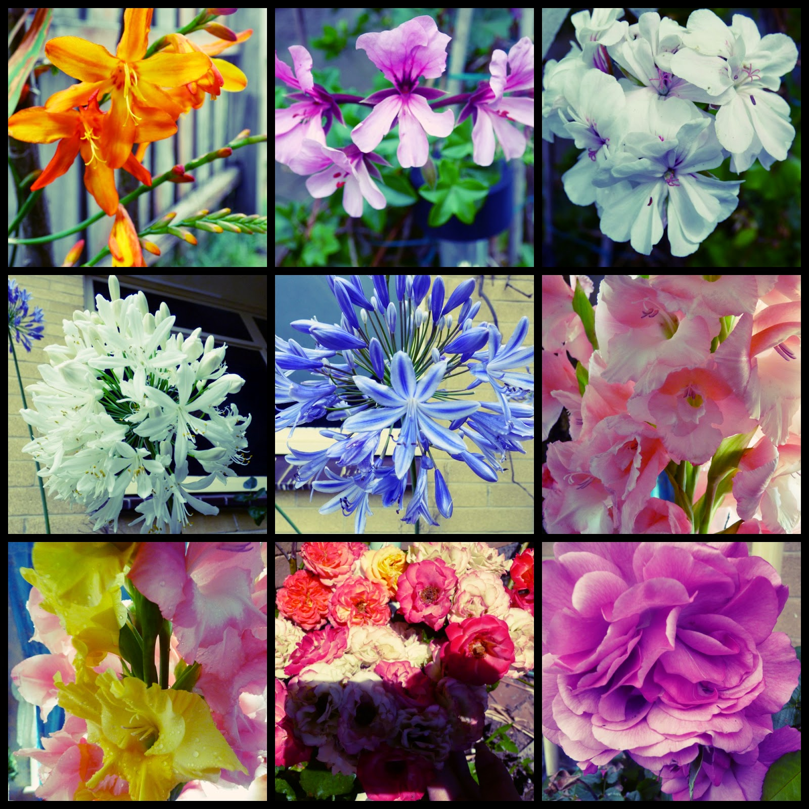 Australia Summer Garden Flowers Collage 2015 Part A Queentulip