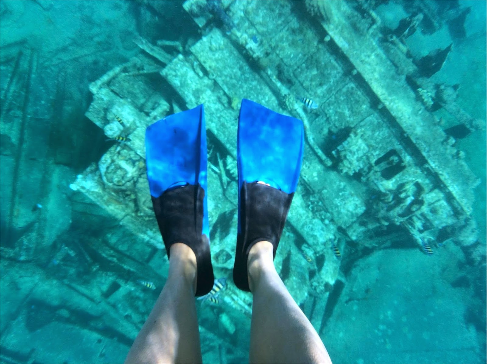 Snorkeling in the Cayman Islands\\Princess Cruises