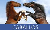 Colección especial de fotos de caballos, yeguas y potros - Horses